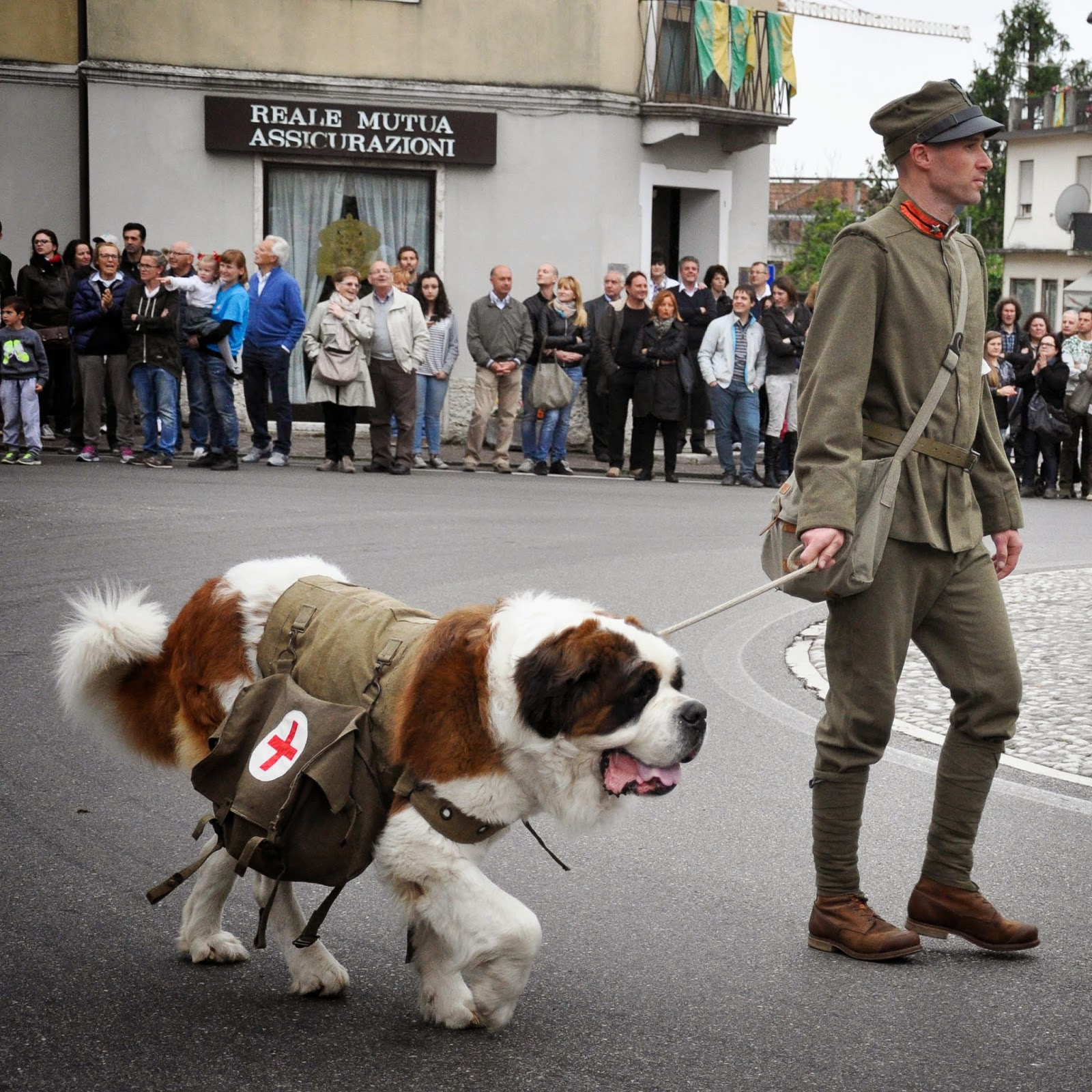 A Saint Bernard at the Parade, Donkey Race, Romano d'Ezzelino, Veneto, Italy
