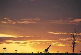joly_arthaud_cheminade_bayrou_dupont_aignan_hollande_eelv_ecologiste_poutou_le_pen_sarkozy_présidentielle_nature_faune_flore_savane_afrique