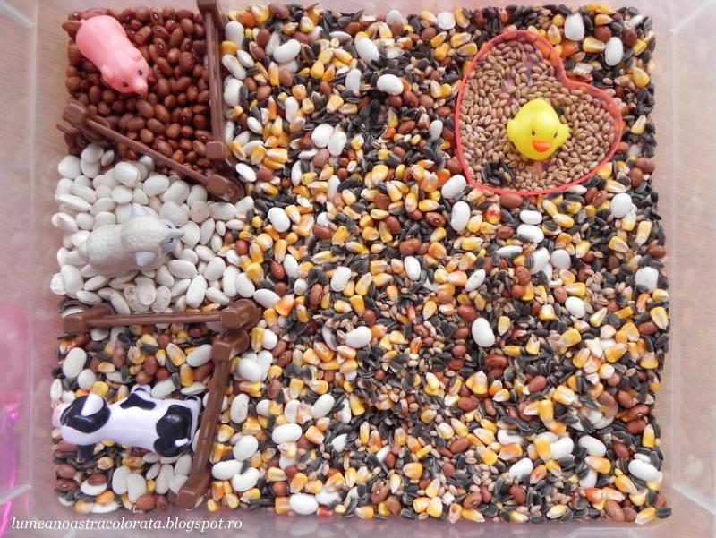 Animalele de la fermă în cutia senzorială