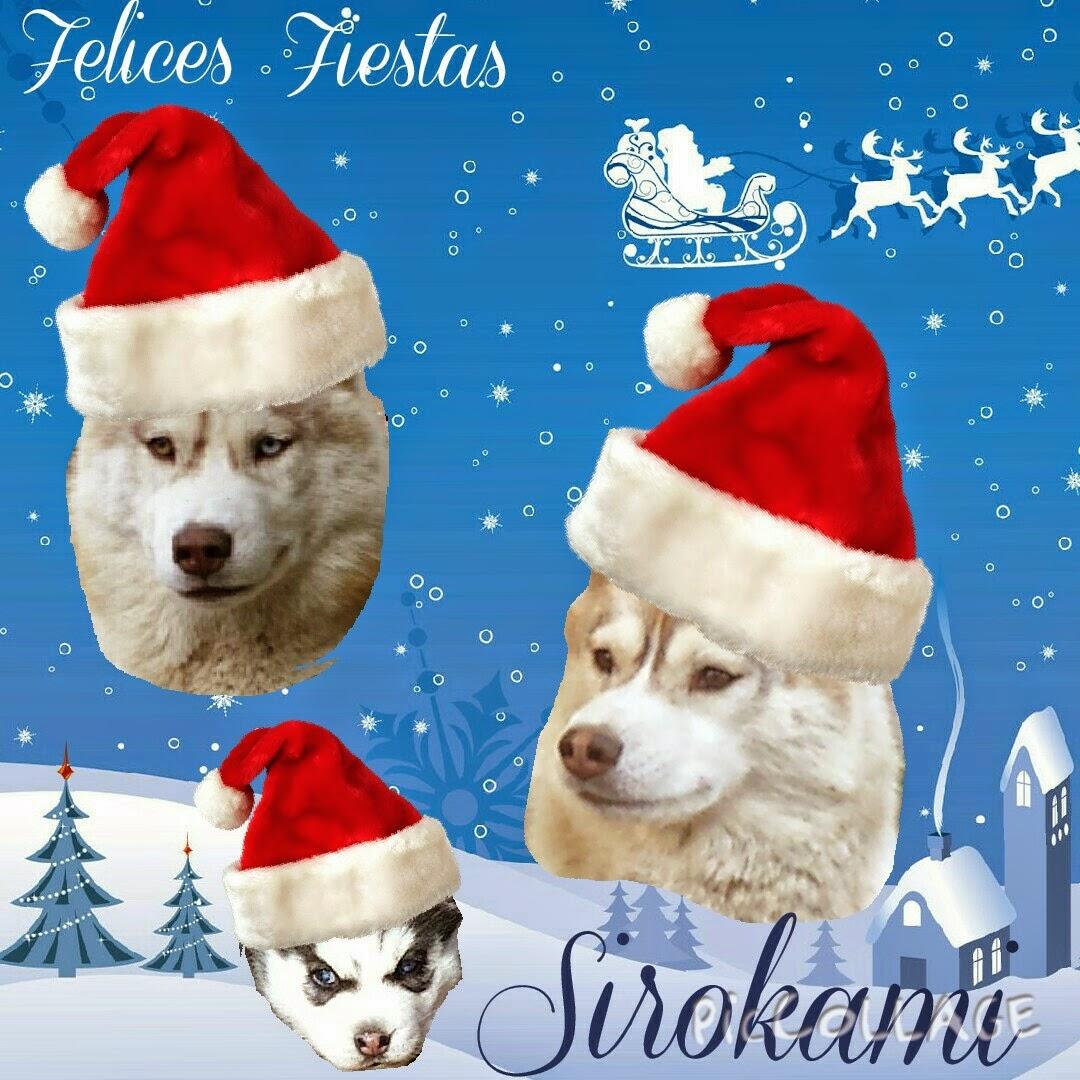 sirokami christmas
