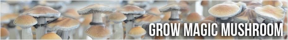 Grow Magic Mushroom