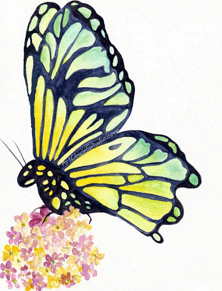 Green Yellow Butterfly Watercolors