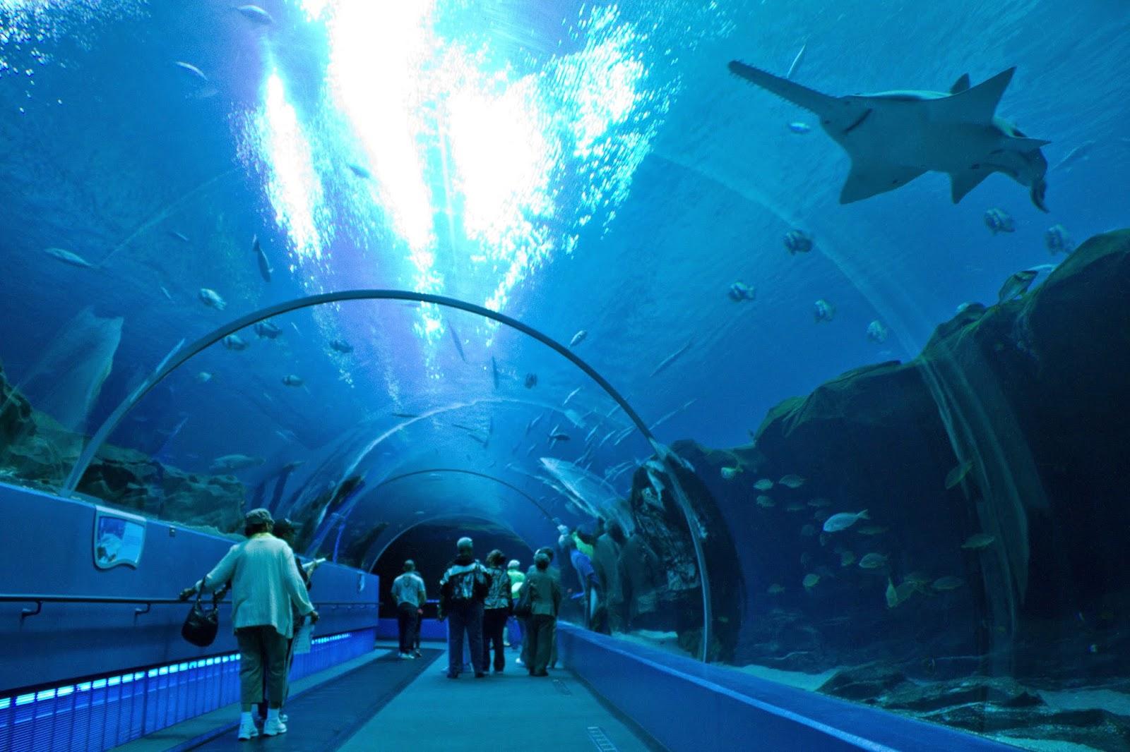 sharks Asian aquarium whale