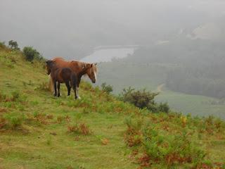 Col des Poiriers Pferde