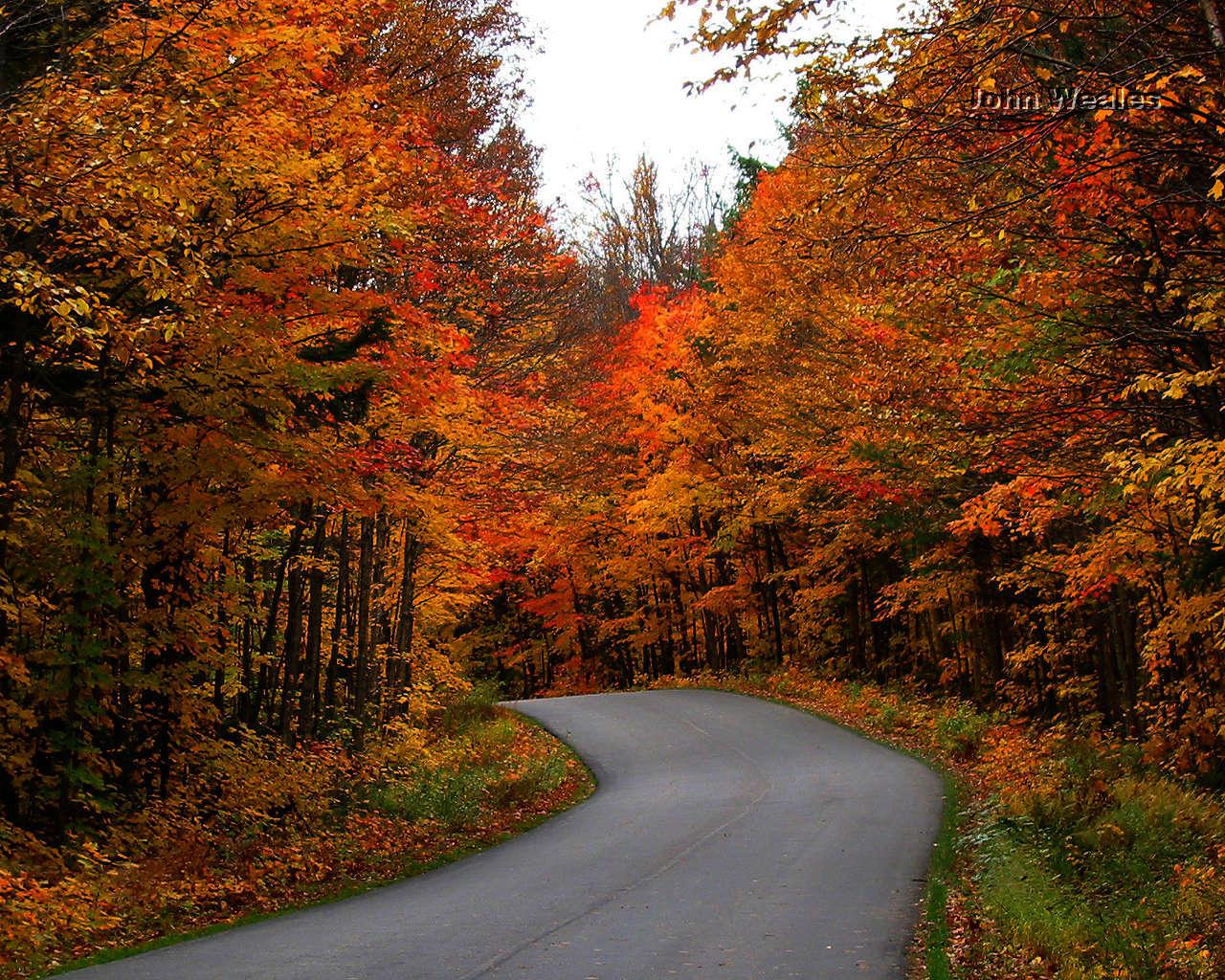 Autumn Path Wallpaper | Free Wallpapers Autumn