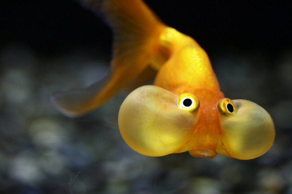 l super cute fish