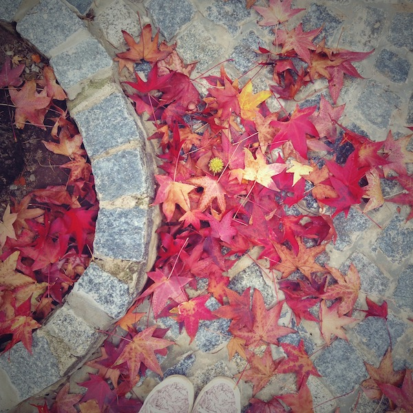 el otoño se instaló en mi barrio · · · Ro Guaraz