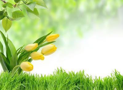 Tulipanes amarillos Wallpaper delicadas flores