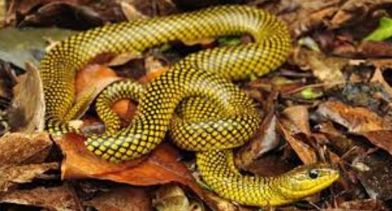 ヘビの夢意味 夢蛇かまれる ヘビに噛まれる夢 蛇に噛まれる夢の意味 蛇の夢意味 白い蛇の夢噛まれる 蛇に噛まれる夢 毒蛇に噛まれる夢 夢占い蛇噛まれる