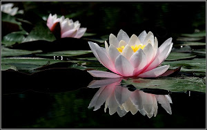 La flor de loto