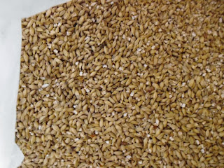 Iceman IPA grains