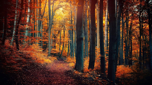 Autumn forest trees leaves yellow orange path nature scenery HD Wallpapers