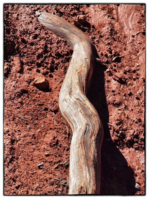 Photo of driftwood against the red earth of Sedona, AZ