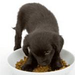 Les besoins alimentaires du chiot