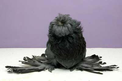 merpati keindahan burung merpati