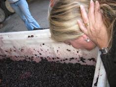 Sexto Paso:  Mosto en fermentación alcohólica