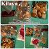Koleksi kilayu / katilayu updated - natural www.batunatural.com
