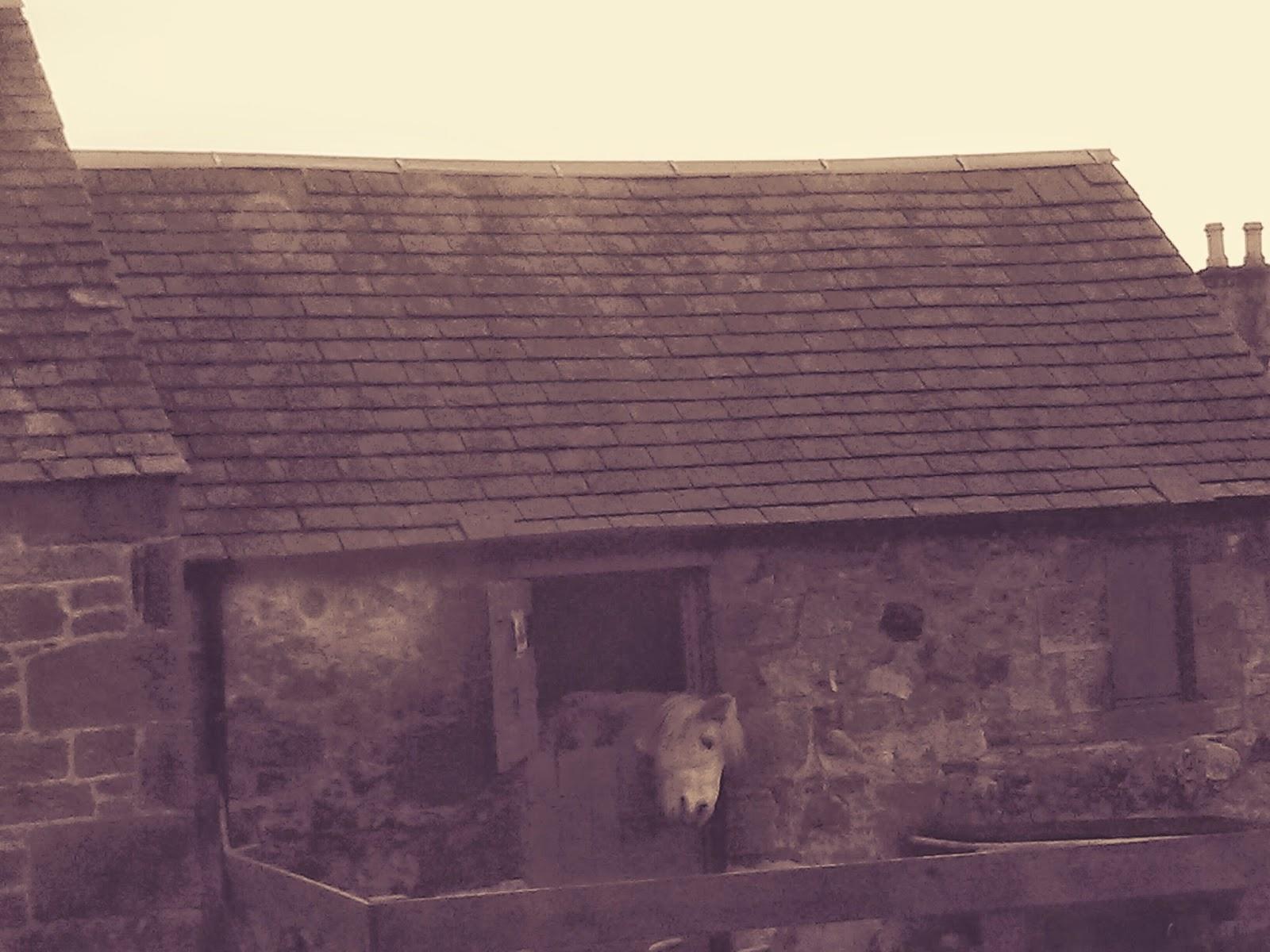 Woodland Holiday Cottage near Edinburgh: Food Dalgety Bay - Louie ...