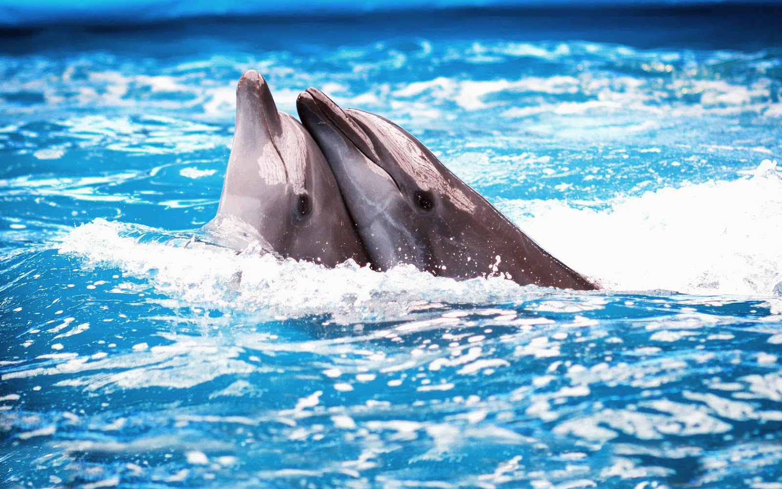 Tempest reborn hd dolphins wallpapers and photos wallpaper with two cuddling dolphins in the swimming pool voltagebd Gallery