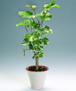 Plantas con Cuidados Especiales, Temperatura, Humedad y Luz