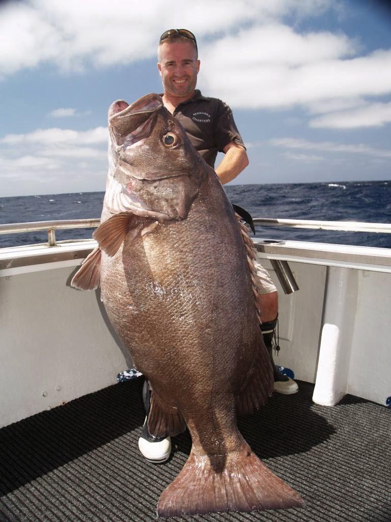 Big Fishes Of The World Hapuka Bass Page 2