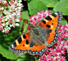 A GUIDE TO GARDEN WILDLIFE
