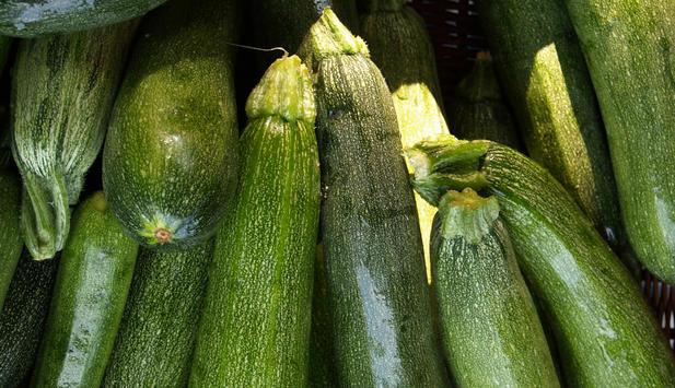 Poisonous Zucchini Fruit