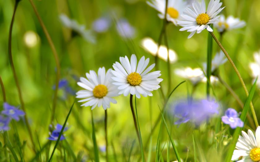 Resultado de imagen de flores silvestres