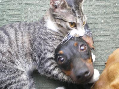 Gatinha Cássia abraçando cadelinha
