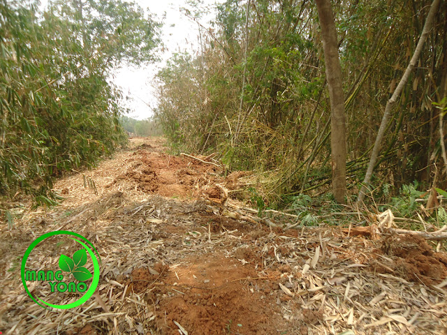 Perobohan pohon untuk akses kendaraan pengangkut tanah