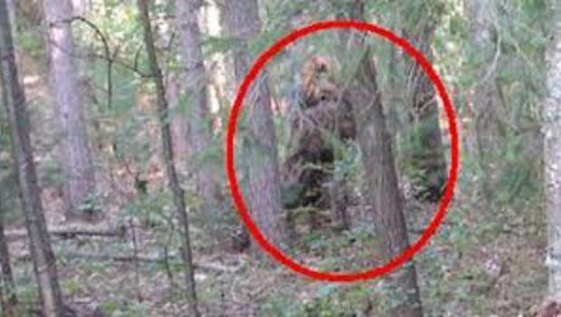 Makhluk Misterius Bigfoot Adalah Nyata Segalanya Tentang Makhluk