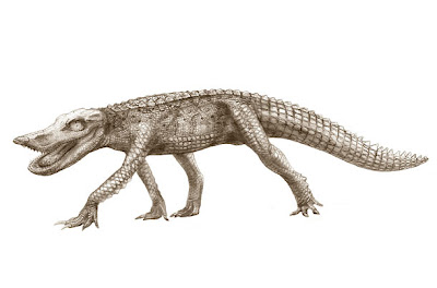 reptiles prehistoricos Anatosuchus