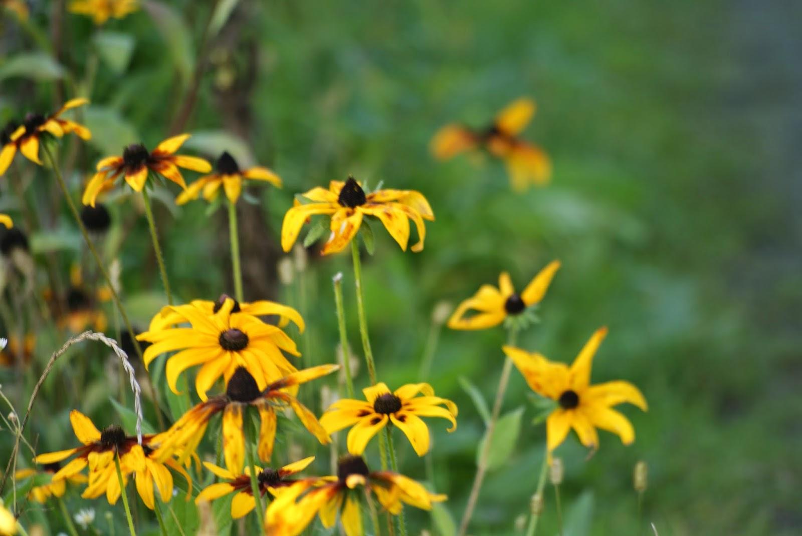 ładne żółte kwiaty jesień zdjęcie yellow flowers
