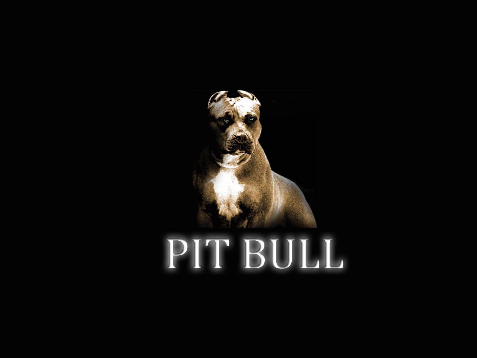 http://2.bp.blogspot.com/--abWv1HiCPY/UEhQOubnabI/AAAAAAAAABQ/ZtTuw5SheTc/s1600/pit_bull_wallpaper.jpg