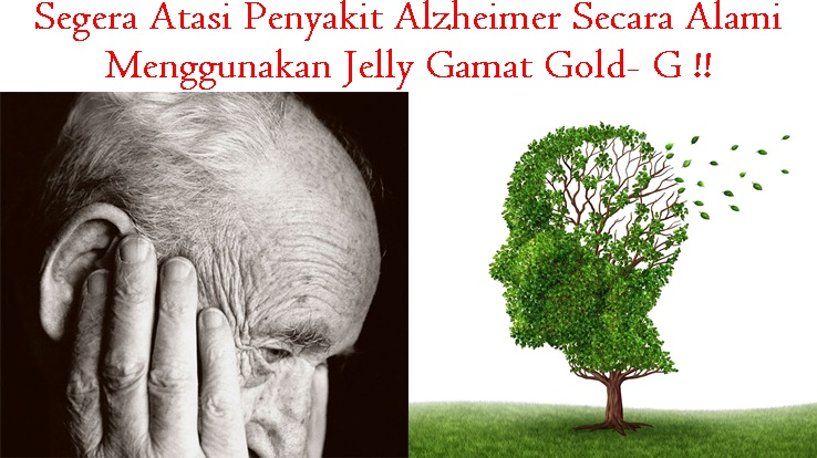 Obat Tradisional Tuntaskan Alzheimer