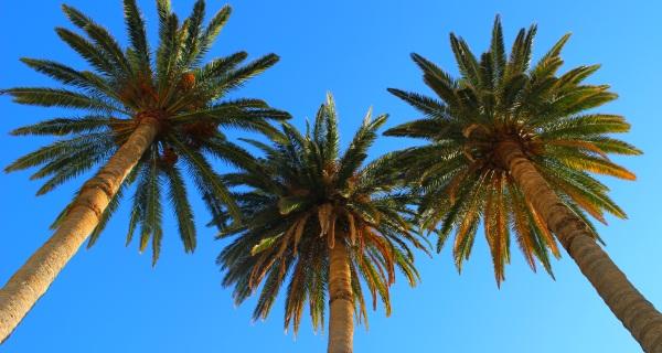 Wakacje pod palmami