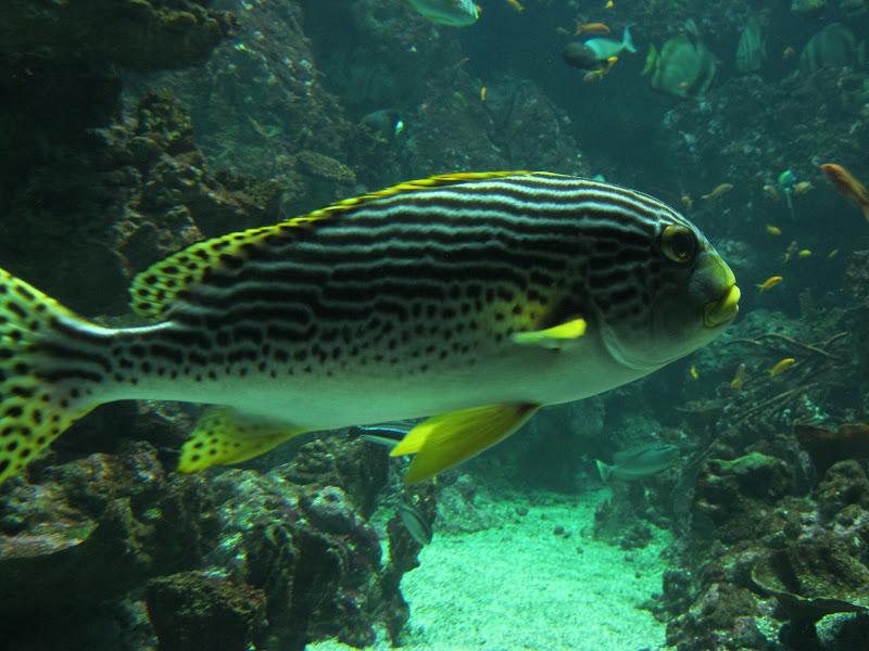l 233 cole maternelle de nissan sortie 224 l aquarium mare nostrum de montpellier