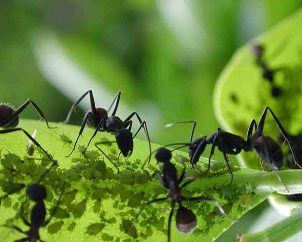 animales-hormigas
