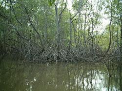 Nanã Buruquê