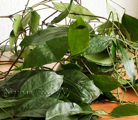 Ukazi leaves Afang Leaves  Gnetum Africanum Okazi leaves, Difference Between Okazi(Ukazi),Utazi, and Uziza leaves