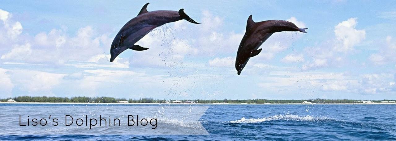 Liso's Dolphin Blog