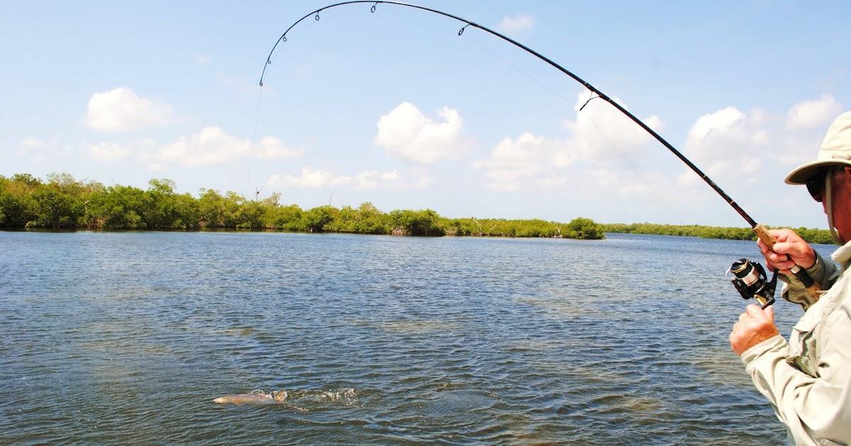 The pine island angler matlacha fishing report another for Pine island fishing charters