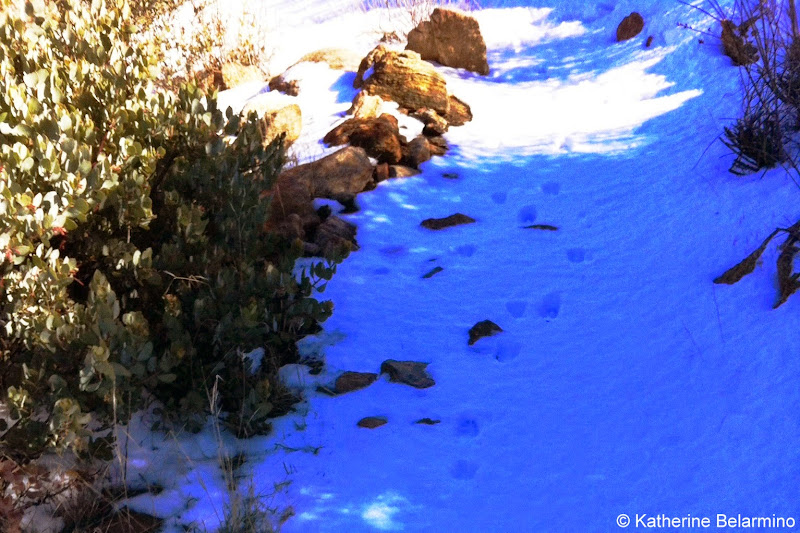 Animal Tracks Along San Diego's Stonewall Peak Hiking Trail