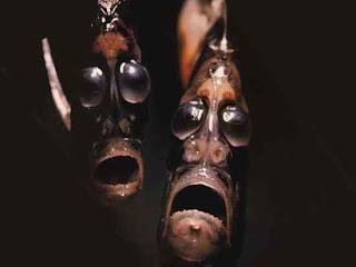 Hatchefish