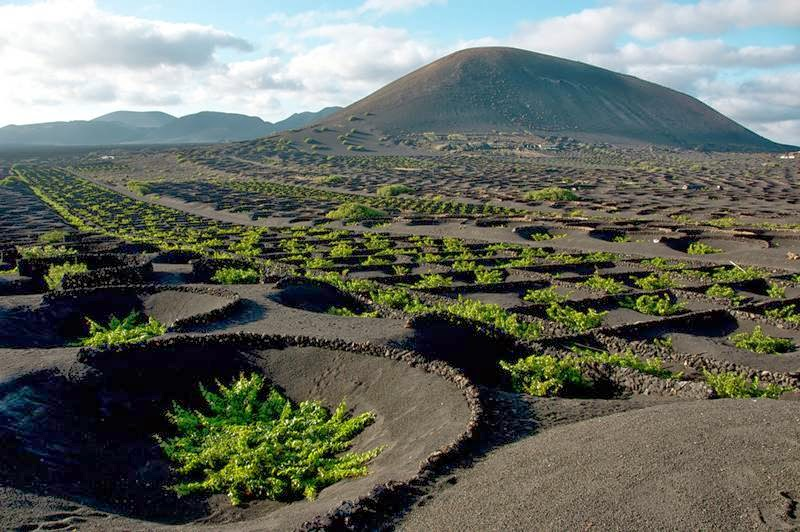 Unique vineyards of Lanzarote, Spain