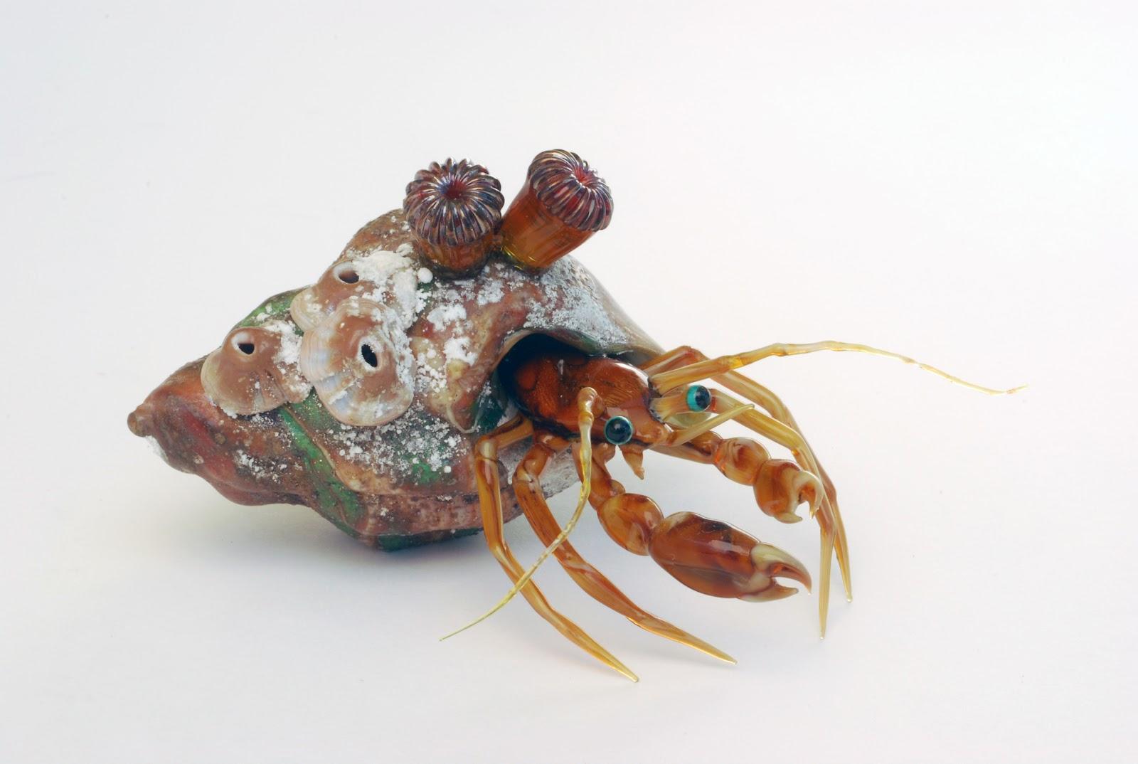 Hermit crab - photo#9
