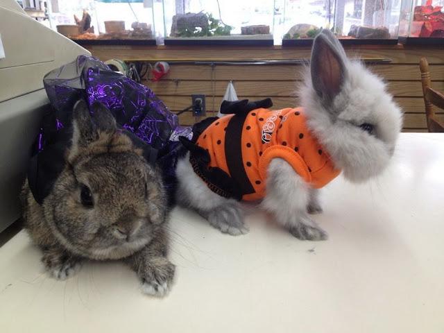 dressed up bunnies, funny animal pictures, animal photos, funny animals