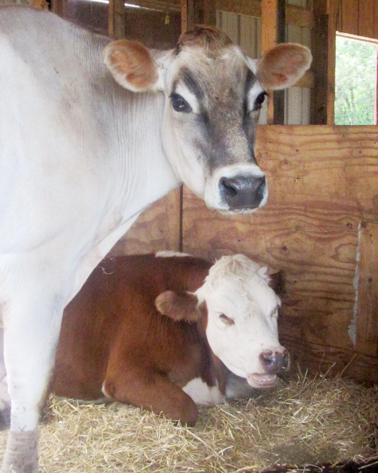 Lambs Farm Dogs For Adoption