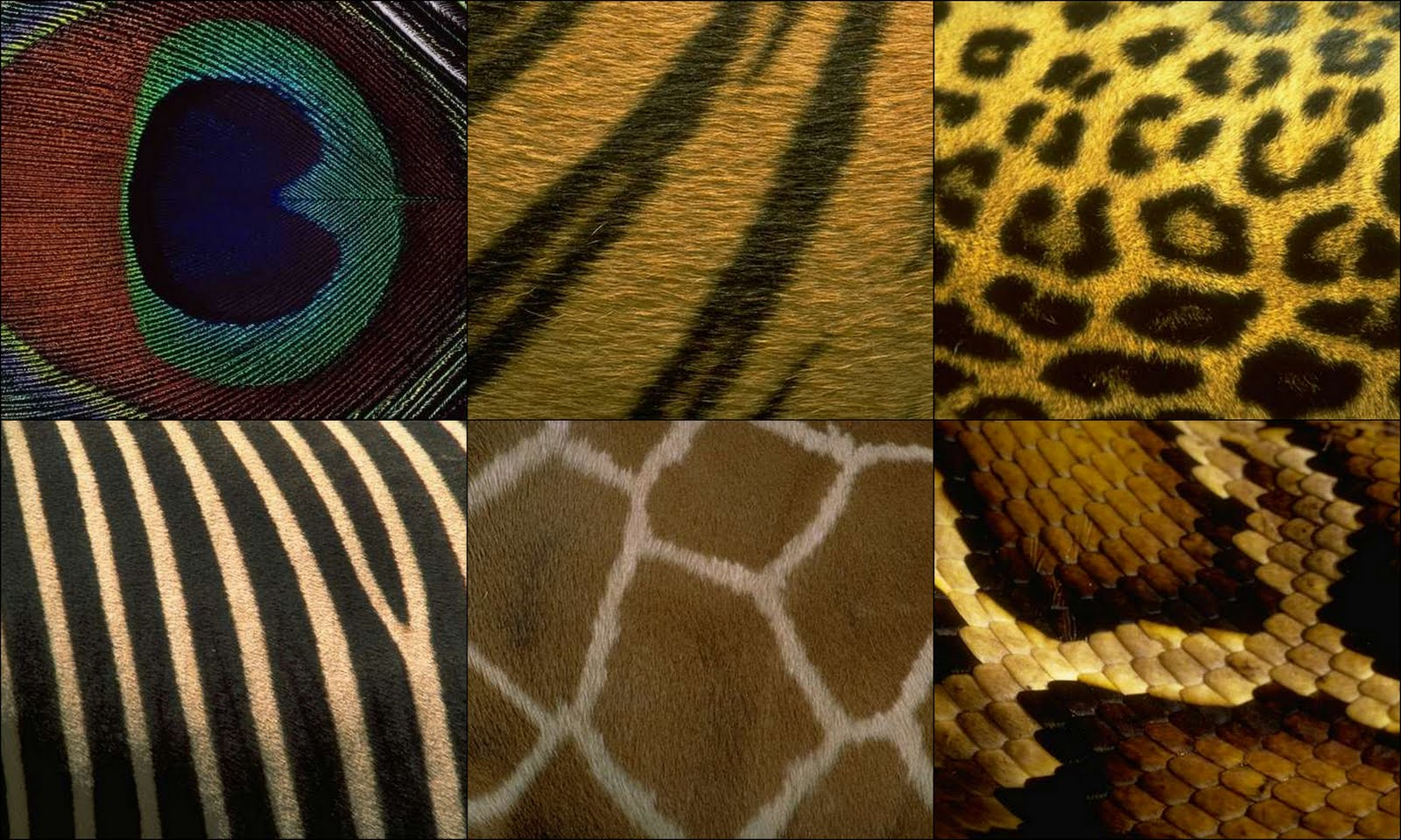 The hunt for chic midweek mood board fur feathers and scales