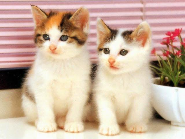 Foto Kucing Lucu Imut dan Menggemaskan 15